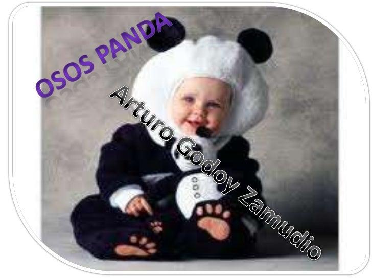 Osos panda<br />Arturo Godoy Zamudio<br />