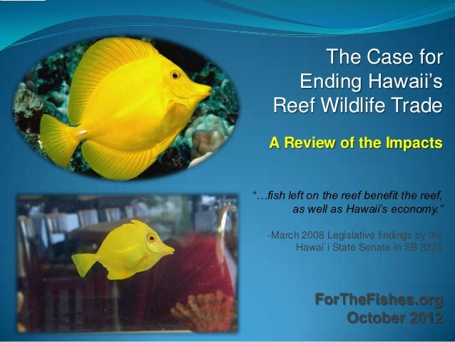 """The Case for      Ending Hawaii's    Reef Wildlife Trade   A Review of the Impacts""""…fish left on the reef benefit the reef..."""