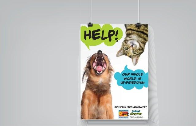 Creative Animal Animal Shelter Creative