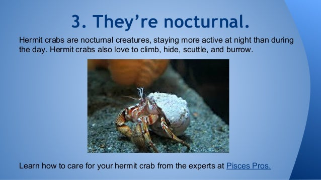 8 Things You Didn T Know About Hermit Crabs