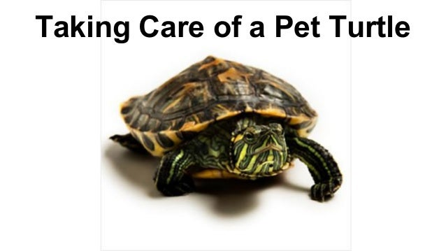 Taking Care of a Pet Turtle