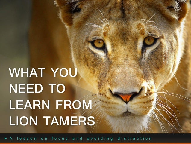 WHAT YOU NEED TO LEARN FROM LION TAMERS A  lesson  on  focus  and  avoiding  distraction