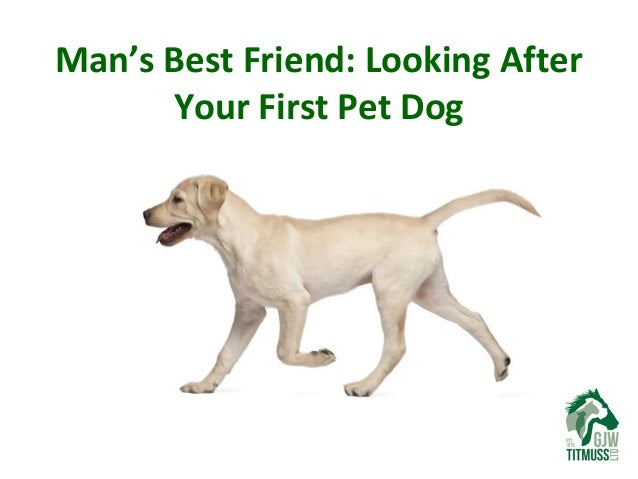 Man's Best Friend: Looking After Your First Pet Dog