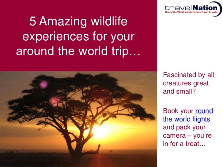 See Wildlife With An Around The World Trip