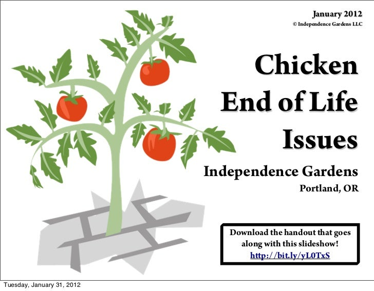 Chicken End of Life Issues