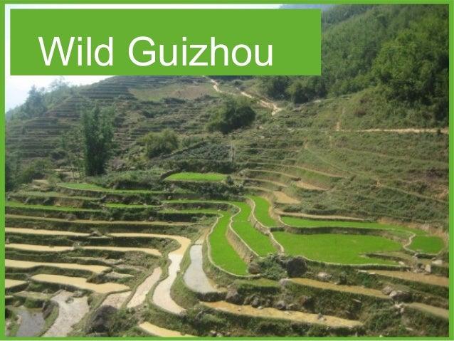 Wild Guizhou
