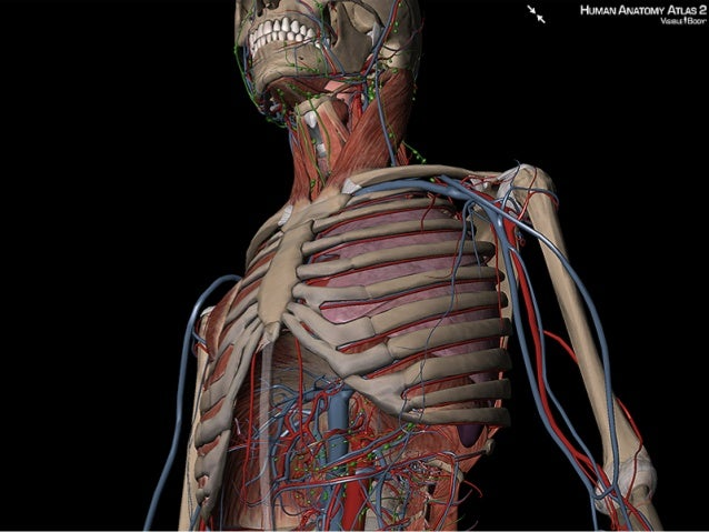 Visible Body Anatomy And Physiology Serial Number 500 Anni Di