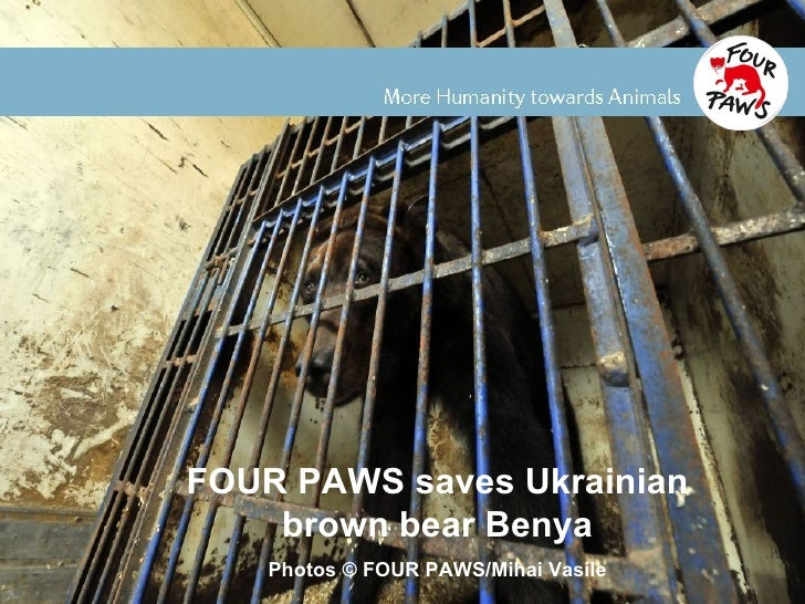 FOUR PAWS rescued Ukrainian brown bear Benya