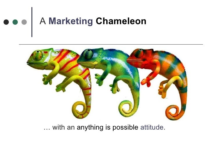 A  Marketing   Chameleon  …  with an  anything is possible   attitude .