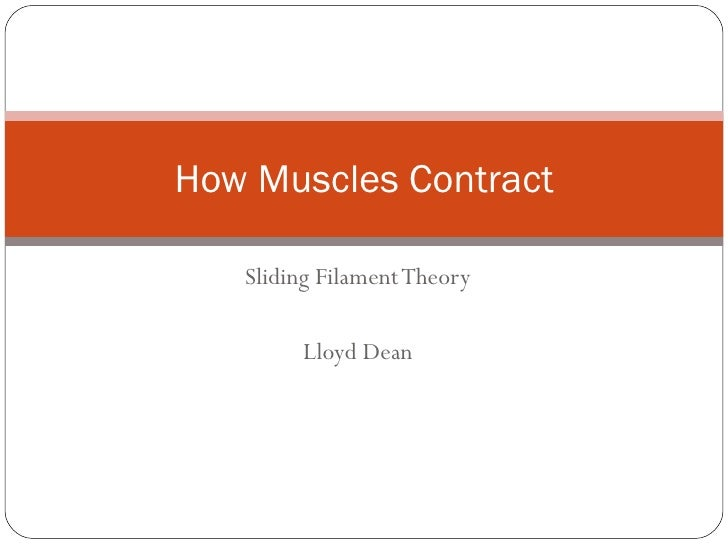 Sliding Filament Theory Lloyd Dean How Muscles Contract