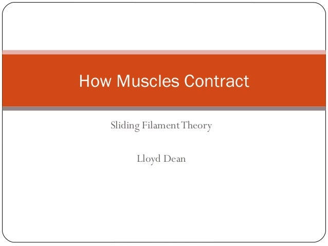 How Muscles Contract Sliding Filament Theory Lloyd Dean