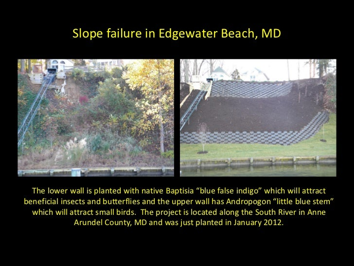 """Slope failure in Edgewater Beach, MD  The lower wall is planted with native Baptisia """"blue false indigo"""" which will attrac..."""
