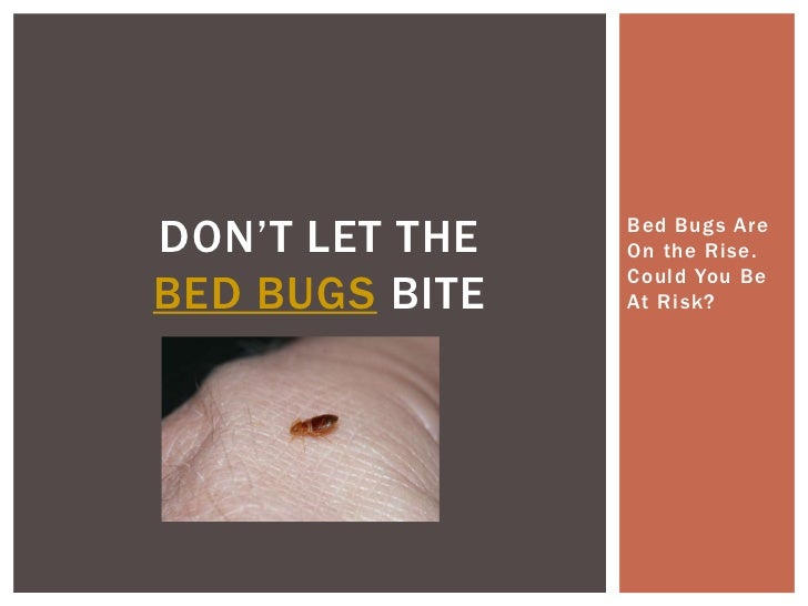 Don't Let the Bed Bugs Bite - Bed Bugs Are On the Rise. Could You Be At Risk?