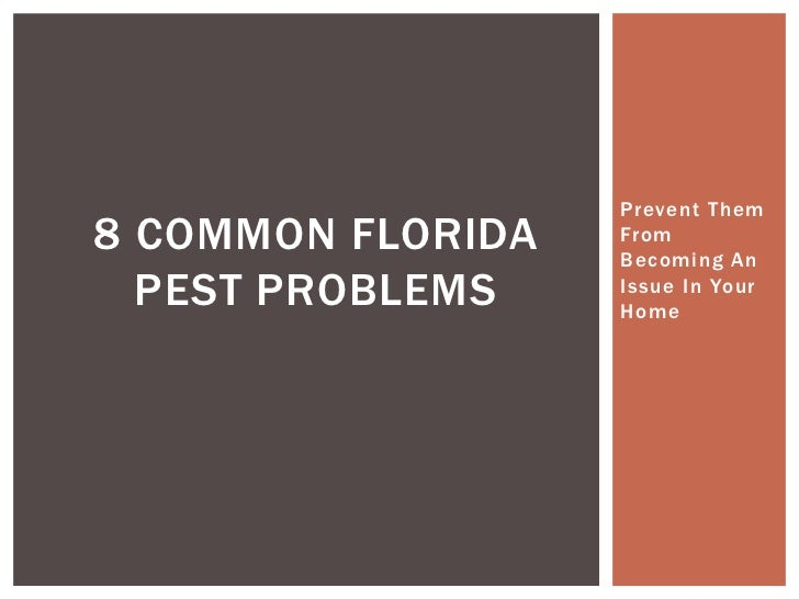 Prevent Them8 COMMON FLORIDA   From                   Becoming An  PEST PROBLEMS    Issue In Your                   Home