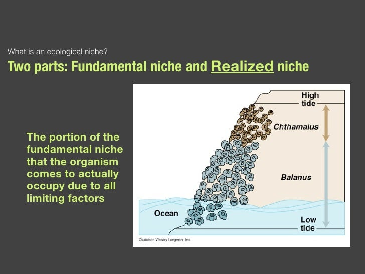 ecological niche In ecology, a niche is a term describing the relational position of a species or population in an ecosystem more formally, the niche includes how a population.