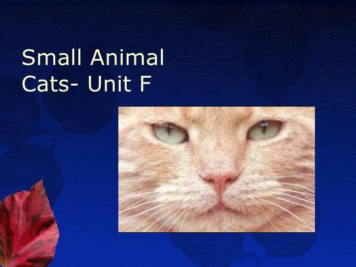 Small AnimalCats- Unit F