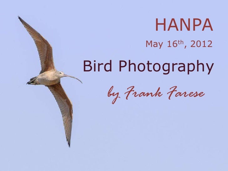 HANPA       May 16th, 2012Bird Photography  by Frank Farese