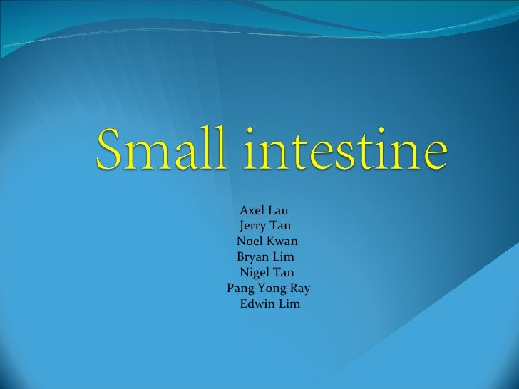 Small intestine (2)