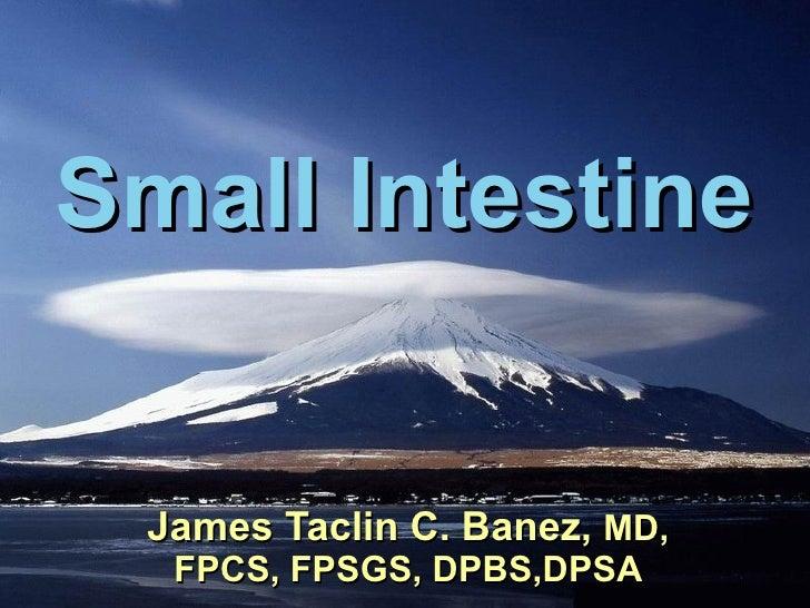 Small Intestine James Taclin C. Banez,  MD, FPCS, FPSGS, DPBS,DPSA