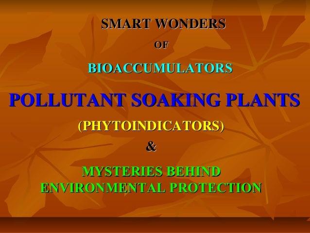 SMART WONDERS              OF       BIOACCUMULATORSPOLLUTANT SOAKING PLANTS      (PHYTOINDICATORS)              &       MY...