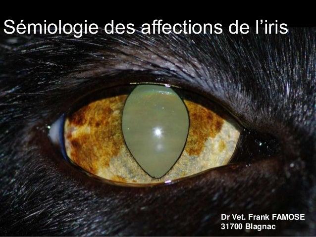Sémiologie des affections de l'iris  Dr Vet. Frank FAMOSE 31700 Blagnac