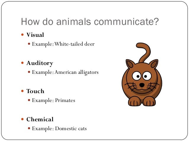 animal communication essay Llanguage is commonly described as a communication tool which allows humans to express their feelings, thoughts and helps them to understand the world it defines the.