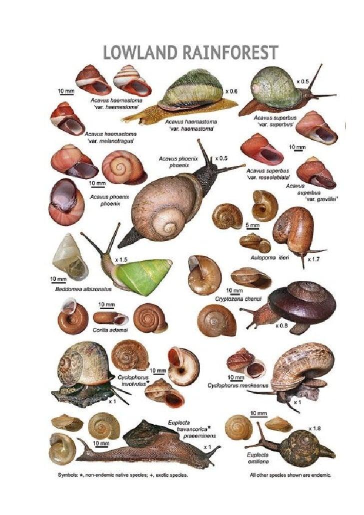 Snail guide - Srilanka