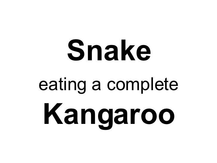 Snake eating a complete   Kangaroo