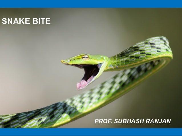 SNAKE BITE             PROF. SUBHASH RANJAN