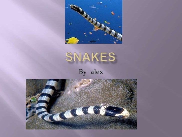 snakes<br />By  alex<br />