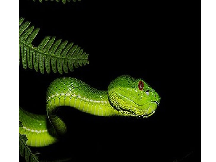 Snakes pictures