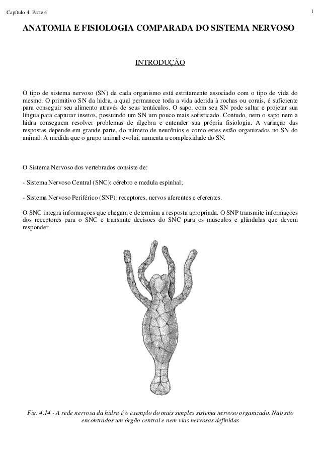 Capítulo 4: Parte 4 1 ANATOMIA E FISIOLOGIA COMPARADA DO SISTEMA NERVOSO INTRODUÇÃO O tipo de sistema nervoso (SN) de cada...