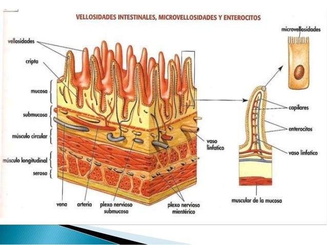 Síndrome de malabsorción intestinal