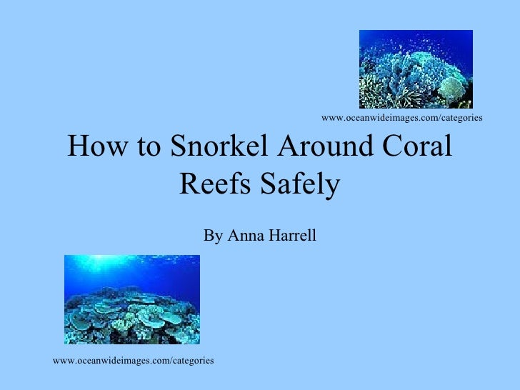 How to Snorkel Around Coral Reefs Safely By Anna Harrell www.oceanwideimages.com/categories www.oceanwideimages.com/catego...