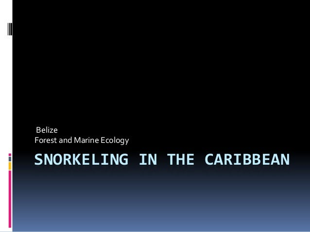 Belize Forest and Marine Ecology  SNORKELING IN THE CARIBBEAN