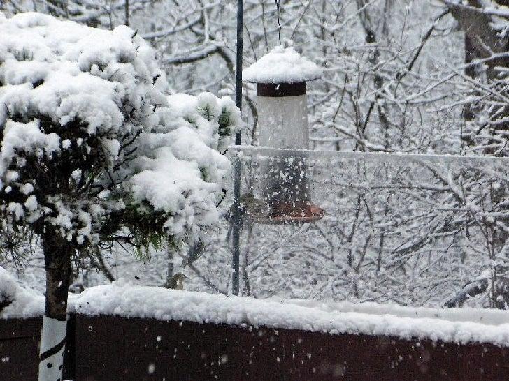 Snowfall at the end of Magnolia Lane