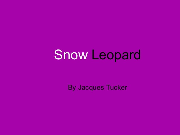 Snow  Leopard By Jacques Tucker
