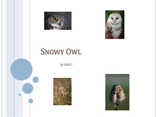 SNOWY OWL By Nikki P