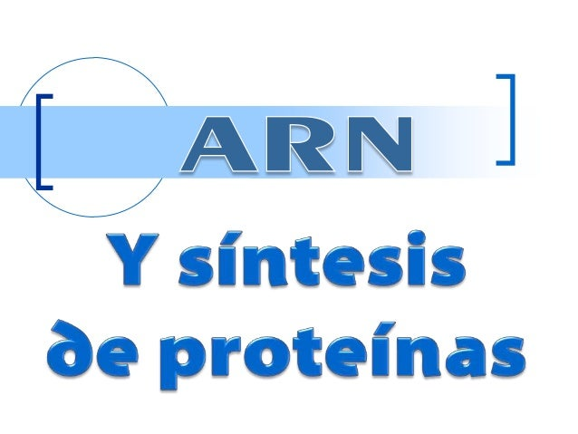 1  •Tipos de ARN  2  •Síntesis de Proteínas  3  •Código Genético
