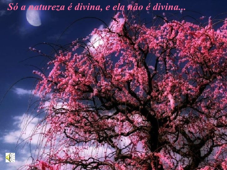 Só a natureza é divina, e ela não é divina...