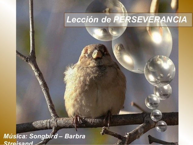 Lección de PERSEVERANCIAMúsica: Songbird – Barbra
