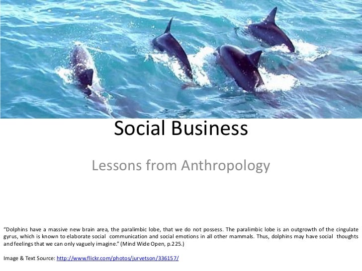 "Social Business<br />Lessons from Anthropology<br />""Dolphins have a massive new brain area, the paralimbic lobe, that we ..."