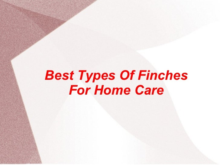 Best Types Of Finches For Home Care