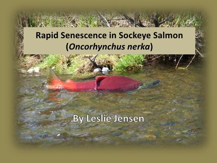 Rapid Senescence in Sockeye Salmon        (Oncorhynchus nerka)