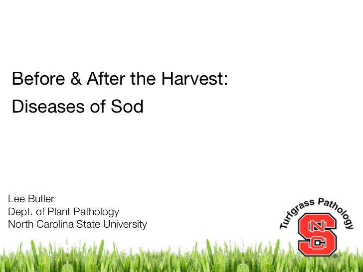 Before & After the Harvest:Diseases of SodLee ButlerDept. of Plant PathologyNorth Carolina State University