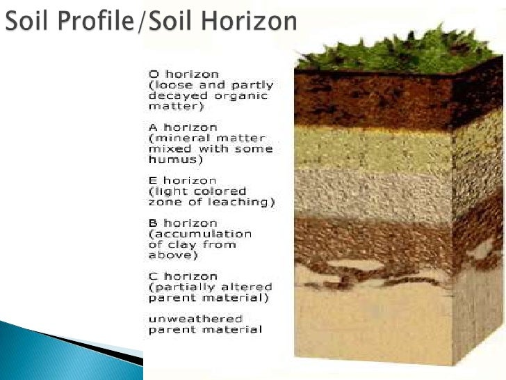 Pics for soil profile horizons information for What is the origin of soil