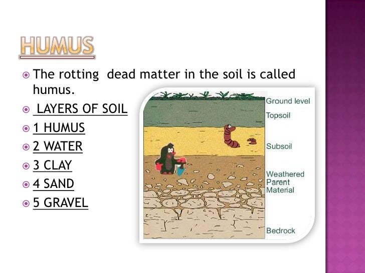 Soil for What is rich soil called
