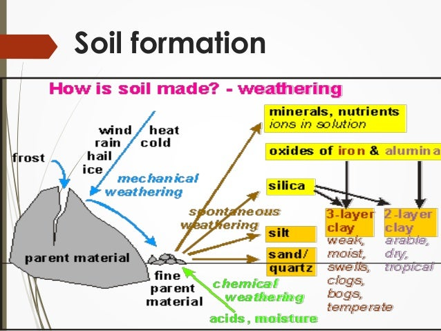 The soil for Soil formation