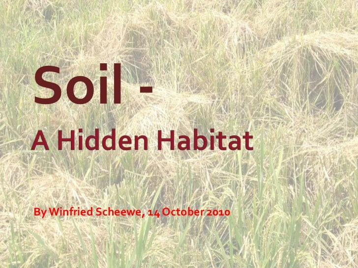 Soil -<br />A Hidden Habitat<br />By Winfried Scheewe, 14 October 2010<br />