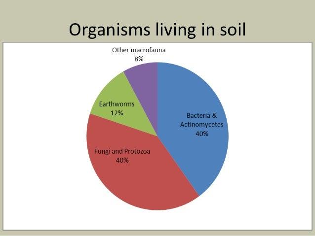 Soil biology for Living things found in soil